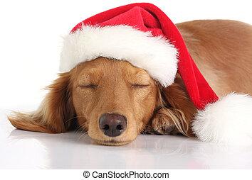 Perro durmiente