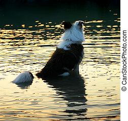 Perro en agua