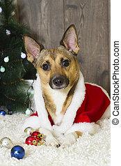 Perro en atmósfera navideña