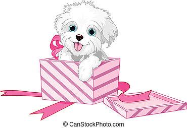 Perro en caja