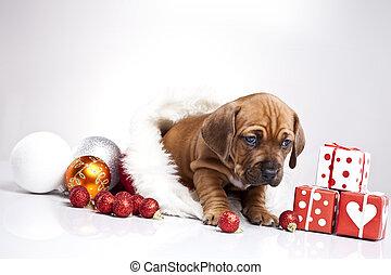 Perro en decoración navideña