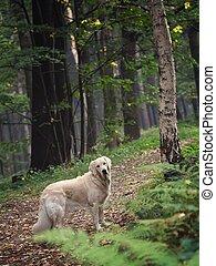 Perro en el bosque