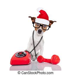 Perro en el teléfono de Navidad sombrero de Santa