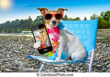 Perro en hamaca en verano