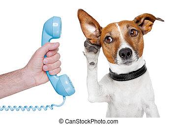 Perro en la mano masculina del teléfono