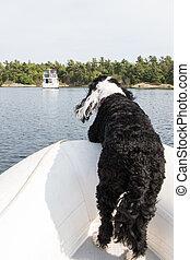 Perro en la proa de un barco inflable
