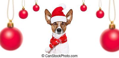 Perro en Navidad