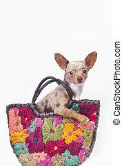 Perro en una bolsa