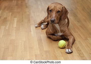 Perro esperando para jugar