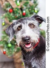 Perro feliz frente al árbol de Navidad