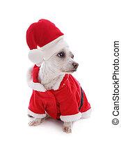 Perro festivo de Navidad con sombrero de Santa se ve de lado