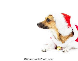 Perro gracioso con trajes de Navidad tirado en aislamiento de fondo blanco