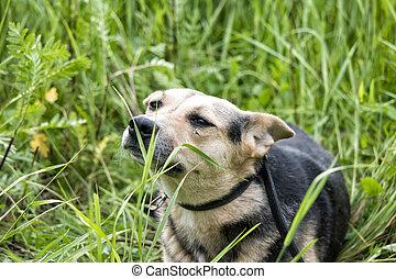 Perro gracioso en la hierba