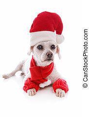 Perro guapo con sombrero de Santa