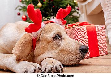 Perro labrador de Navidad