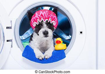 Perro lavador