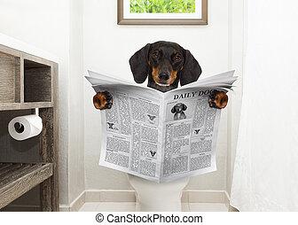 Perro leyendo el periódico