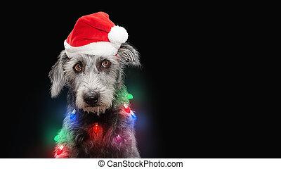 perro, luces, navidad, divertido, envuelto