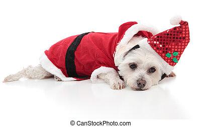Perro malo usando un traje de Santa