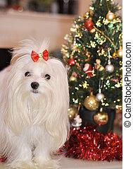Perro maltés en el fondo del árbol de Navidad