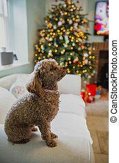 Perro mascota en Navidad