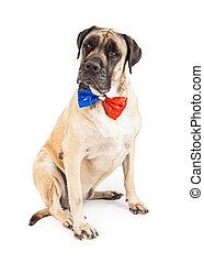 Perro Mastín con corbata de día de independencia