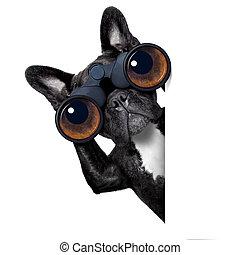 Perro mirando a través de binoculares