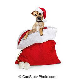 perro, navidad, saco, santa, lindo
