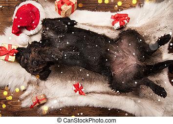 Perro negro posando en traje de Santa, Navidad.