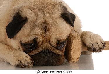 Perro Obediencia, con patas descansando en el entrenamiento de pesas