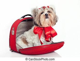 Perro peludo en una bolsa
