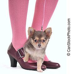 Perro pequeño en los pies