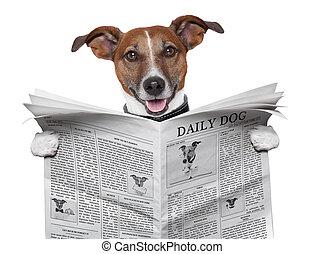 perro, periódico