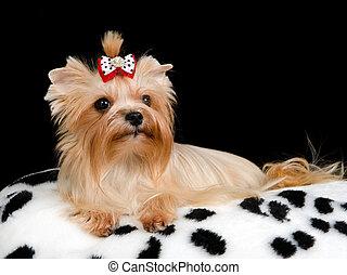Perro real en el almohadón