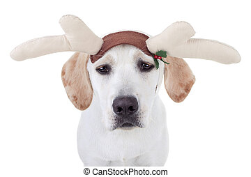 Perro reno navideño