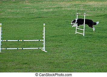 Perro saltando en un entrenamiento de agilidad