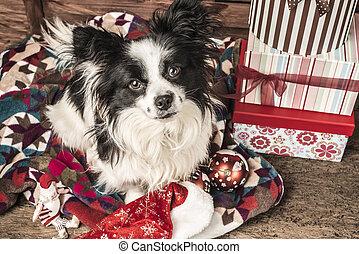 Perro, tarjeta de Navidad