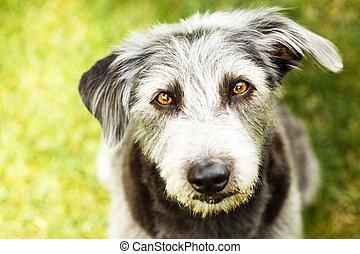 Perro Terrier al aire libre mirando hacia arriba