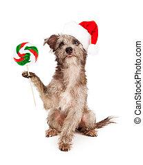 Perro Terrier con dulces de Navidad