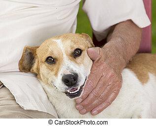Perro tierno