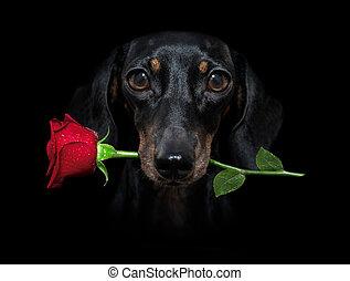 perro, valentines, boca, rosa