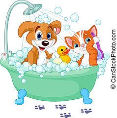 Perro y Gato bañándose