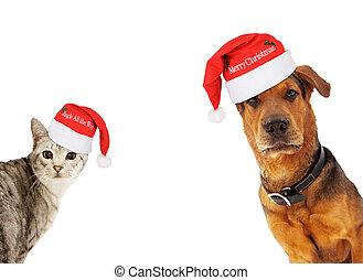 Perro y gato con espacio de copia
