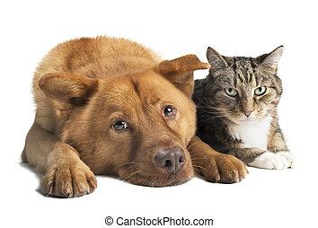 Perro y Gato juntos ángulo amplio