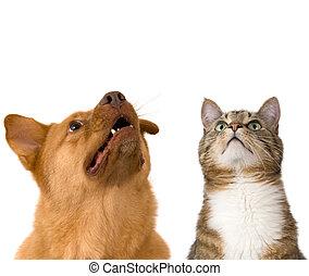 Perro y gato mirando hacia arriba