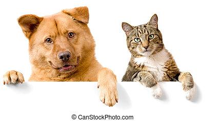 Perro y Gato sobre bandera blanca