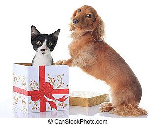 Perro y Navidad presente.
