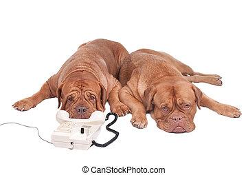 Perros al teléfono