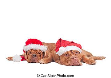 Perros con sombreros de Navidad