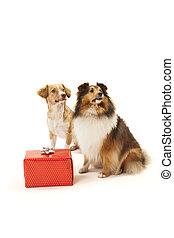 Perros con un regalo